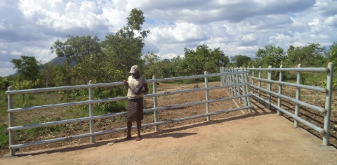 Construction of Cattle crush in Lagoro Sub County, Kitgum District